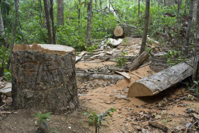 essay about rainforest destruction 1 immediate causes the immediate causes of rainforest destruction are clear the main causes of total clearance are agriculture and in drier areas, fuelwood collection.